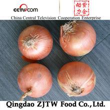 Golden Onion for Sale