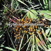 high quality saw palmetto fruit extract powder