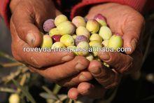 Olive Oil Price in Turkey