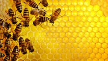 100% pure natural bee honey