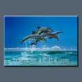 Vente hot animal dauphin. d'impression photo