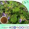 100% Natural Radix Salviae Miltiorrhizae Extract 10:1