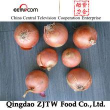Fresh Golden Onion Supplying Southeast Asia