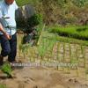 WANDA 2 rows mini manual rice plante