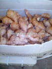 Calcium Package Fresh Dry Ginger For Europe Market Only On Promotion Sale