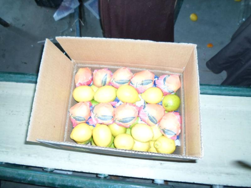 yellow fresh adalia lemon-citrus fruit