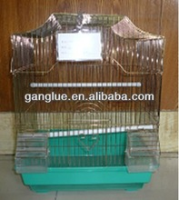 6A2042 finch birds for sale