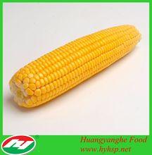 Yellow Corn Non GMO