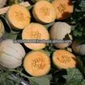 proveedores al por mayor de almizcle puro de semillas de melón aceite en estados unidos