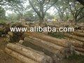 madera de cedro madera