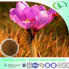 Crocus sativus Extract/saffron extract/Crocus extract