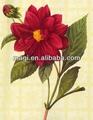 fleur rouge motif décoratif peinture
