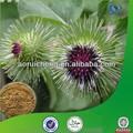 Arctium lappa l/de raíz de bardana extracto/arctiina 10%- 40%