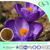 Best Offer Saffron Crocus Extract,Saffron Crocus 10:1