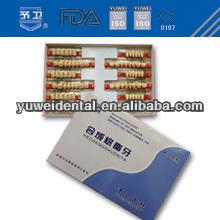 Yuwei Synthetic resin teeth Vita shade 2 -layer Acrylic resin dental