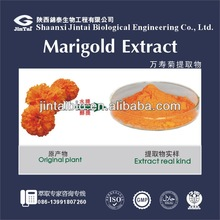 natural top quality 5%-90% lutein marigold extract
