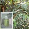 eucalyptus oil extract