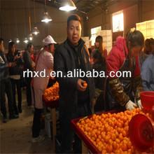 el nombre de cítricos todas las frutas de alta calidad de la granja de frutas de fábrica del fabricante