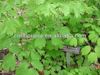 Blue cohosh Extract, Caulophyllum thalictroides Extract