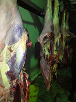 HALAL CHILLED FRESH BEEF CARCASS
