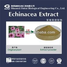 high quality bulk 4% echinacea angustifolia extract