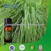 Lemongrass Oil / Lemon Grass Essential Oil
