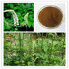 Black Cohosh Extract Triterpene glycosides 5% (HPLC)