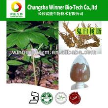 Fábrica de gmp 98% podophyllum resina, podophylline