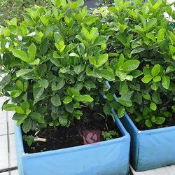 Supply square roof portable planter garden wall planter