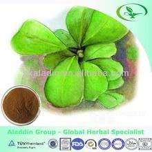 100% Pure natural Yerba mate extract Mateine 1%-10% HPLC