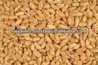 bulk wheat grain for sale