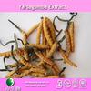 High quality yarsagumba extract producer