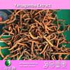 Yarsagumba extract 5%~30% polysaccharide powder manufacturer