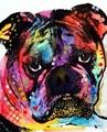Chegada nova moderna handpainted animal famosa pintura de arte pop, cão pop arte da pintura em tela para a sala de estar