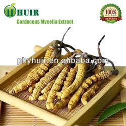 Cordyceps Sinensis (Yarsagumba)extract