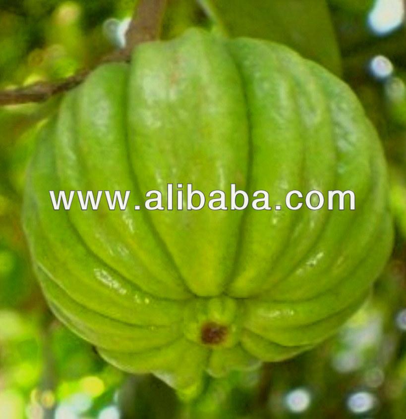 Where Do I Buy Garcinia Cambogia Fruit Tree - www