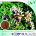 erba medicinale estratto di origano