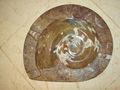 amonita fósiles de marruecos de color marrón