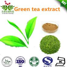100% Pure Green Tea Powder Extract
