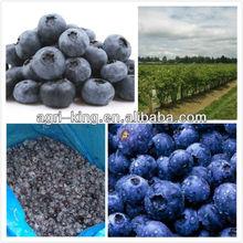 Frozen Blueberry Berry