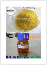 Detergent Lipase Amylase Protease