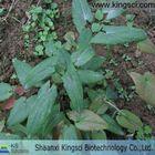 100% natural plant extract Epimedium Leaf Extract Icariin 10% 20% 40% 50% 90% 95% 98% HPLC