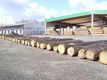 poplar logs and KD s4s lumber,beech logs,birch,oaks and ash wood