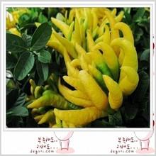 Natural bergamot extract powder 5%-95%,10:1,50:1,100:1