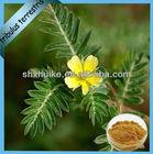 tribulus terrestris extract saponins 80% in bulk