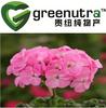High Quality pelargonium sidoides root extract /Geranium extract