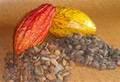 trinitario los granos de cacao