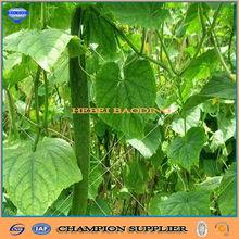 9gsm 1.7m width Green Climbing Pea and Bean Net