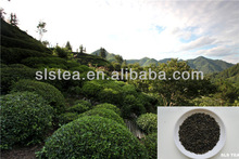 Green tea Mee tea 9370 by the leading Green Tea factory in China