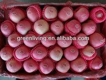 fresh qinguan apple from China,fresh apple (apple:fuji, huaniu, gala, golden,qingguan, red star)